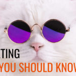 Meme Marketing: What You Should Know